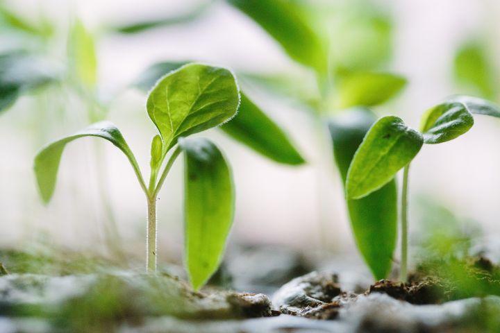 ЕЭК начала антидемпинговое расследование в отношении гербицидов из ЕС